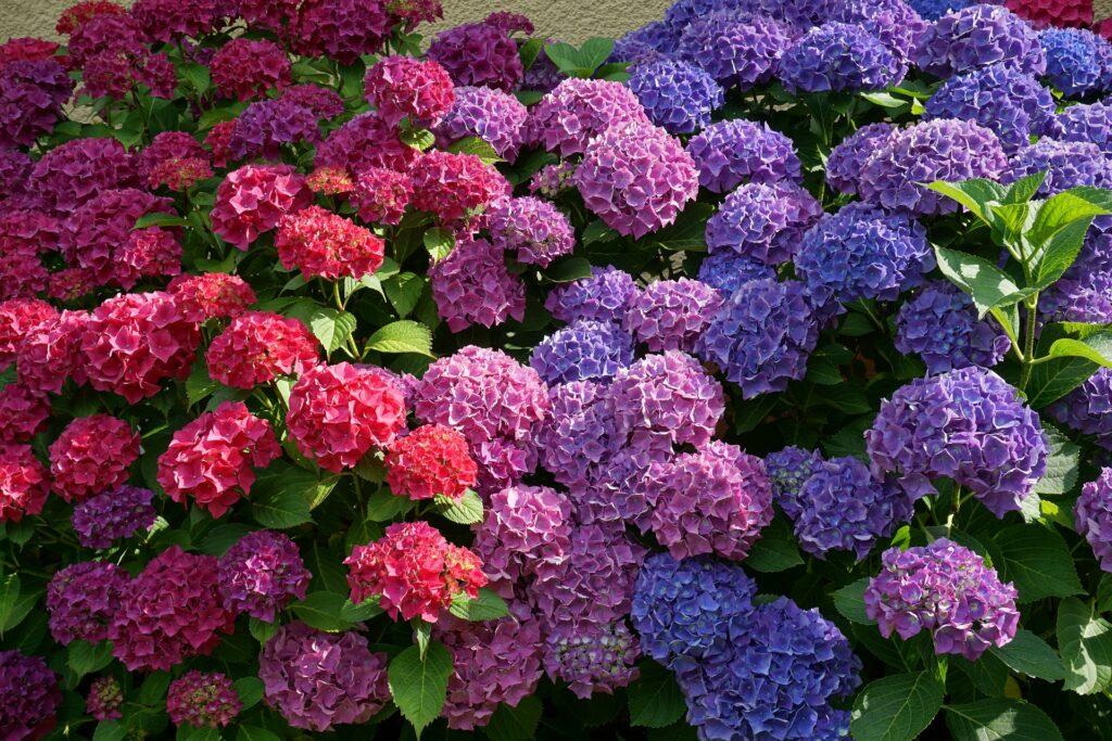 future_gardens_kwiaty